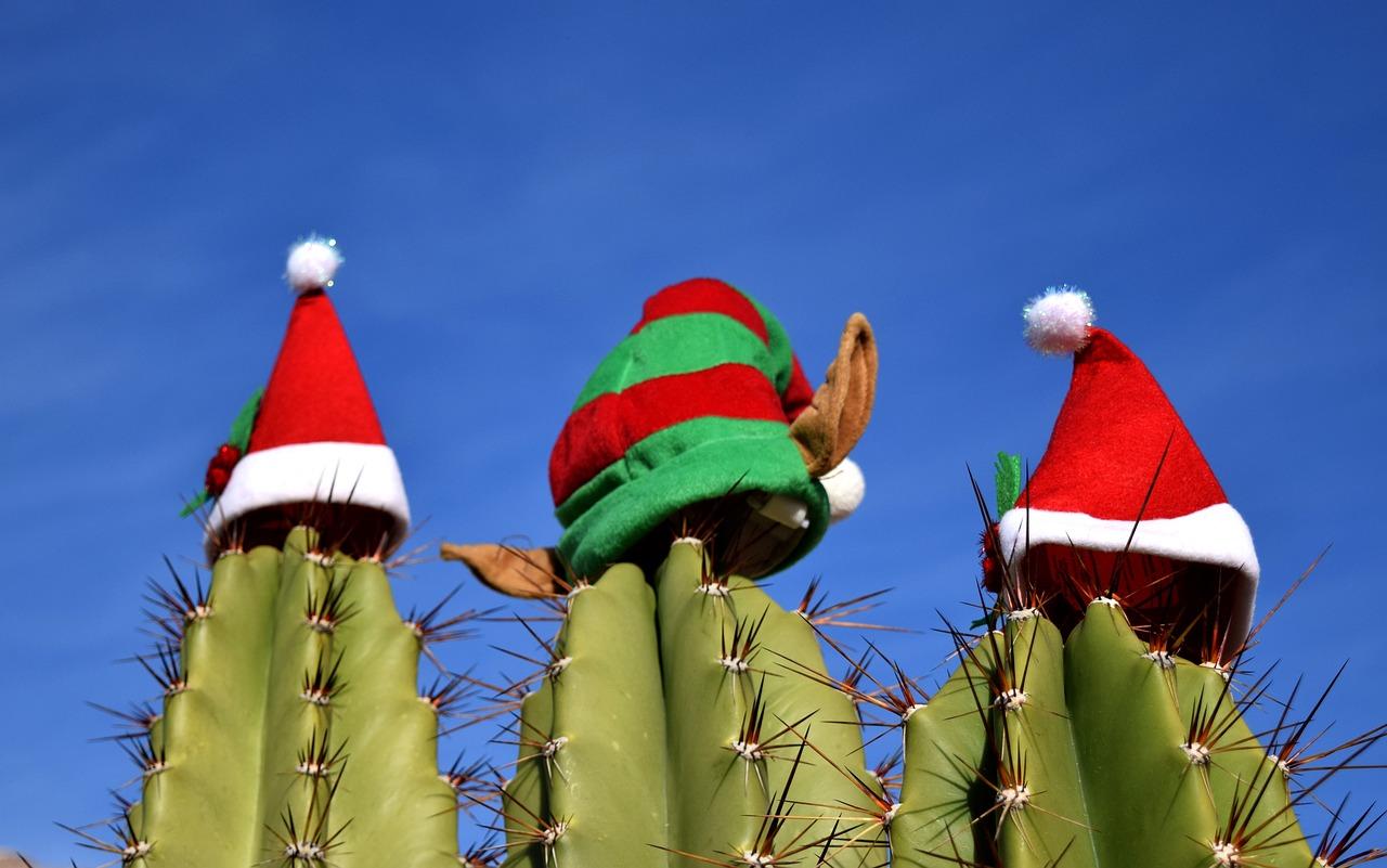 cacti with hats | used cars in phoenix arizona